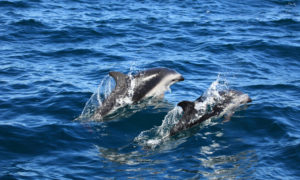 grenada-whale-and-dolphin-spotting-GD10-mosaic